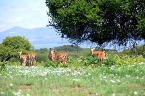 Wildlife in Naivasha,Loldia House